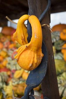 Pumpkin, Autumn, Orange, Yellow, Gourd, Decoration