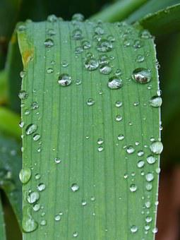 Leaf, Drops, Rocio, Moisture, Detail