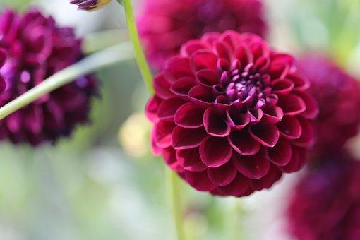 Flower, Blossom, Bloom, Calyx, Vielett, Purple, Plant