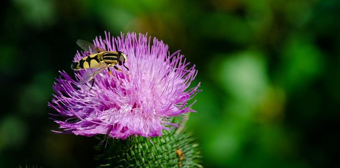 Insect, Yellow, Bee, Animal, Nature, Flower, Fly