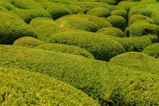 Boxwood, Garden, Pattern, France, Green, Nature, Europe