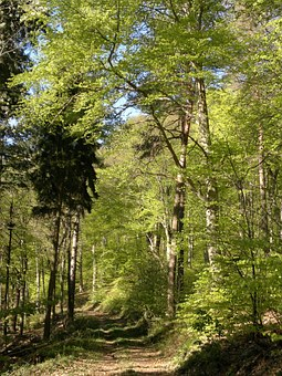 Forest, Spring, Green, Trees, Nature, Leaves, Landscape