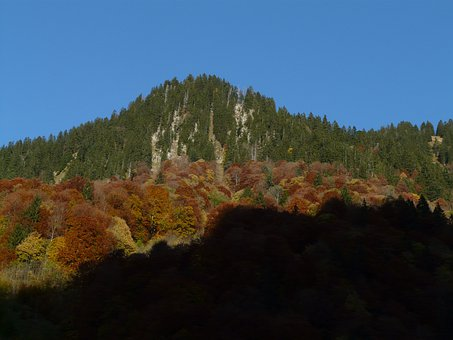 Mountain, Autumn, Forest, Fir Forest, Deciduous Forest