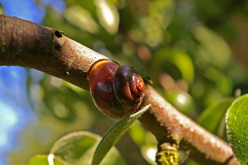 Shell, Nature, Snail, Wood, Close Up, Animal, Sunbeam
