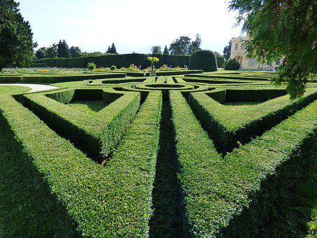 Maze, Hedge, Green, Way, The Path, Park, Nature, Plants