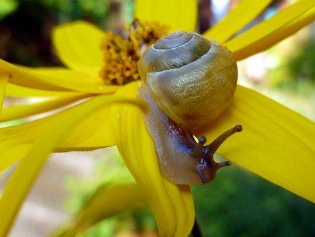 Snail, Mollusk, Shell, Slowly, Nature, Animals, Crawl