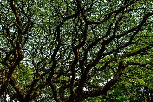 Tree, Branch, Maze, Strong, Big, Huge, Powerful, Large