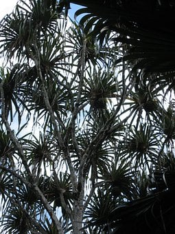 Tree, Pattern, Plant, Tropical, Exotic, Backlighting