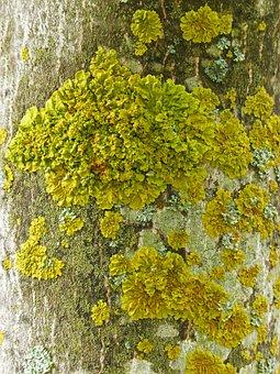 Lichen, Moss, Trunk, Moisture