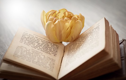 Book, Font, Flower, Tulip, Blossom, Bloom, Yellow