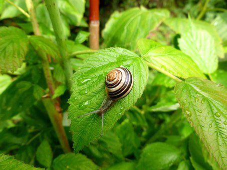 Small Animal, Wirbellos, Snail, Garden, Shell, Summer