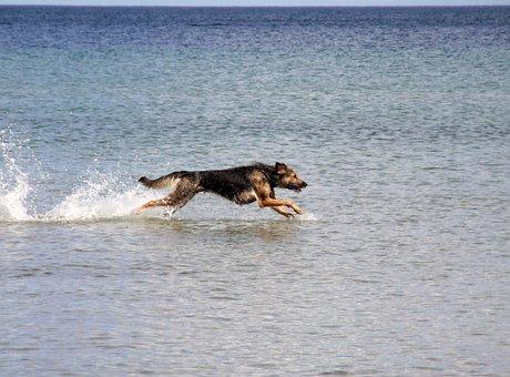 Dog, Baltic Sea, Sea, Run, Race, By The Water, Animal