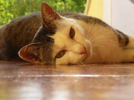 Cat, Tiger White, Rest