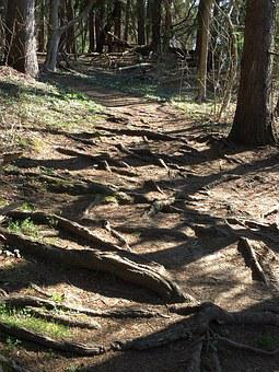 Roots, Path, Tree With Roots, Difficult Path