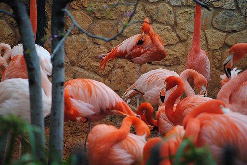 Flamingo, Pink, Nature, Wildlife, Animal, Bird, Exotic