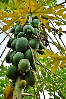 Papaya, Fruit, Fetus, Tree, Exotic