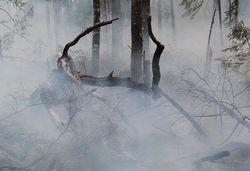 Forest Fire, Fire, Hot, Sweden
