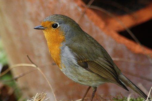 Bird, Red Goblets, Garden, Anrtur, Grey, Feather