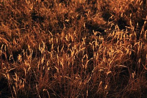 Grass, Afternoon, Sunset, Nature, Beautiful, Summer