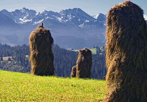 Kopki Hay, Grass Skoszona, Stacks Of Hay, Sunny, Work