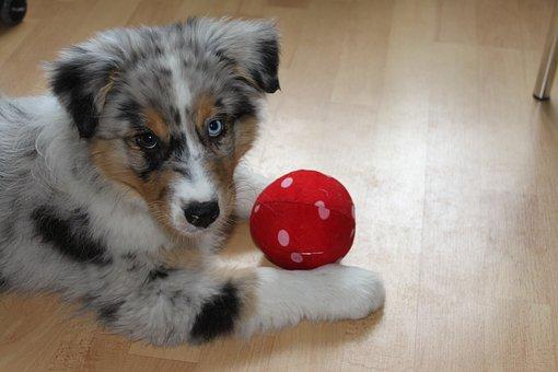 Puppy, Dog, Ball, Play, Fun, Nature, Animal, Pet