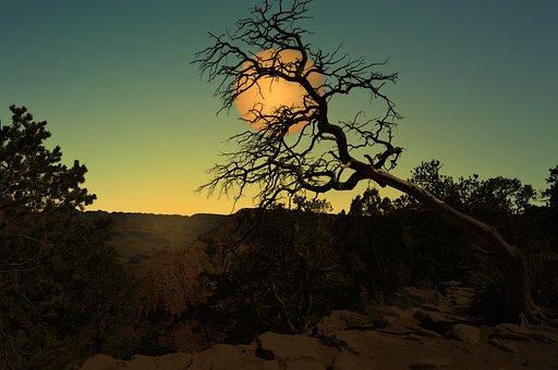 Landscape, Moon, Night, Tree, Cerrado, Moonlit Night