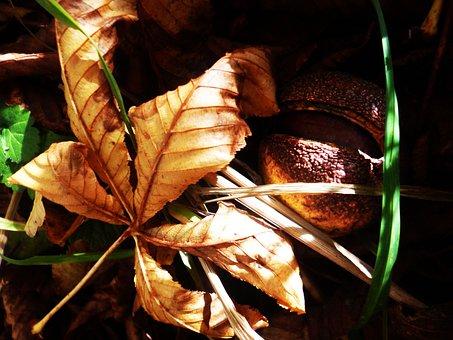 Chestnut, Sheet, Autumn, Dry Leaves, Fetus, Tree, Plant