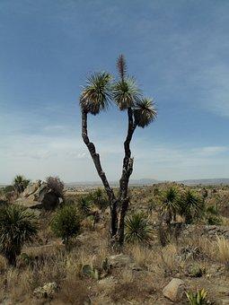 Desert, Palma, Rocks, Dry, Sky, Clouds, Blue, Green