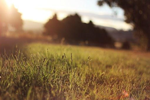 Afternoon, Sunset, Grass, Nature, Beautiful, Summer