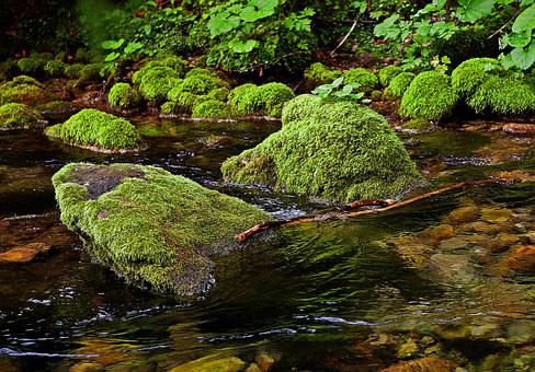 The Stones, Overgrown, River, Torrent, Stream, Water