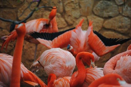 Flamingo, Pink, Bird, Animal, Nature, Wildlife, Exotic