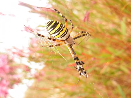 Spider, Insect, Arachnid, Bug, Danger, Halloween, Scary