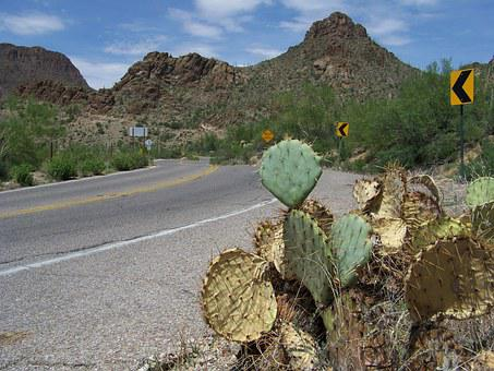Tucson, Arizona, Usa, Mountain Park, Cactus, Landscape