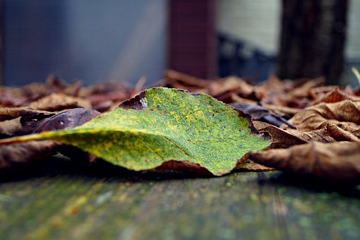 Autumn, Case, Leaves, Green, Colorful Look