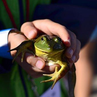 Frog, Fair, Boy, Jump, Child, Activity, County Fair