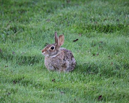 Rabbit, Bunny, Animal, Cute, Easter, Furry, Fluffy, Fur