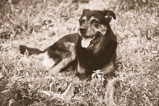 Dog, Friend, Pets, Animal, My Favorite, Domestic, Doggy