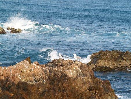 Waves, Winter, Coastal, Gangwon Do
