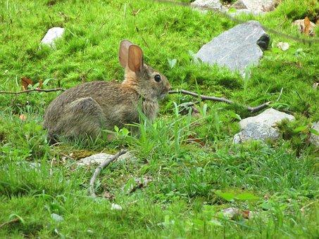 Bunny, Rabbit, Wildlife, Mammal, Cute, Little, Green