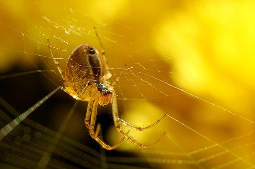 Spider, Network, Nature, Close, Cobweb, Insect, Macro