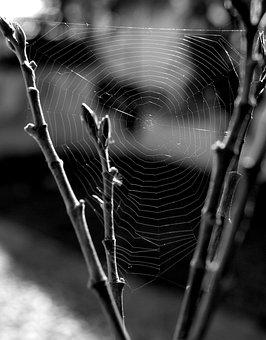 Spiderweb, Spider, Nature, Insect, Trap, Cobweb, Creepy