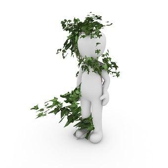 Ivy, Plant, Green, Nature, Climber Plant, Ivy Leaf