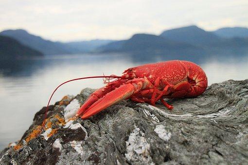 Lobster, Seafood, Crebs, Red