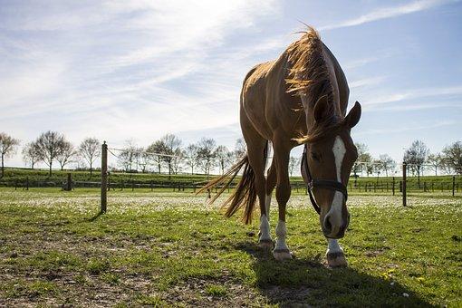 Horse, Spring, Brown, Blue Sky, Muzzle, Grass, Air