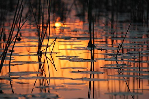 Abendstimmung, Water, Botswana, Nature, Okavango Delta