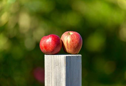 Apple, Outside, Orchard, Green, Food, Healthy, Fruit