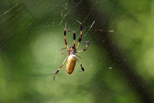 Spider, Web, Spider Web, Arachnid, Predator