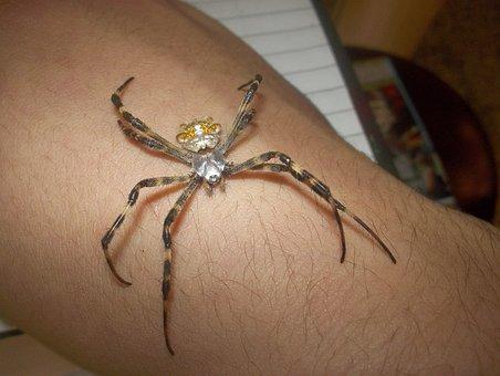 Spider Silver Argentina, Chandelier Large, Golden Silk
