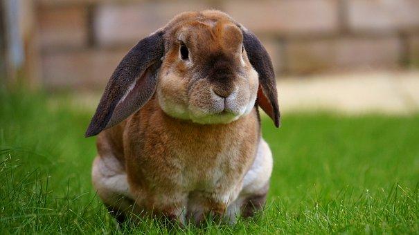 Rabbit, Garden, Bunny, Spring, Green, Grass, Cute, Ears