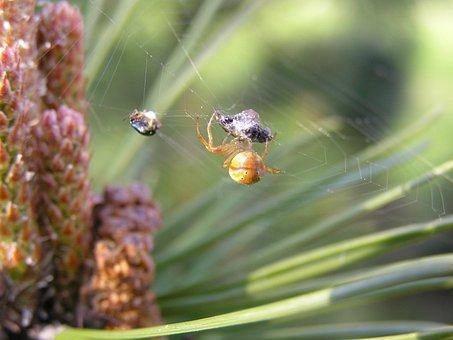 Spider Web, Insect, Trap, Victim, Arachnid, Pattern